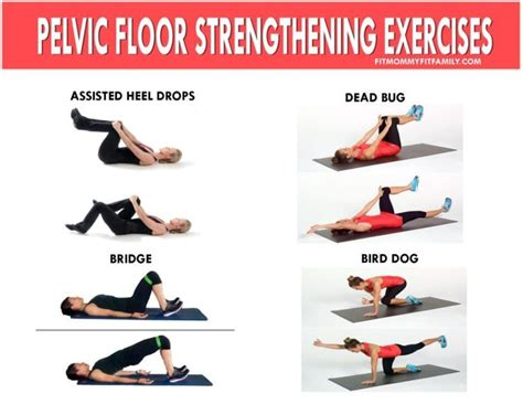 Pelvic Floor Prolapse Exercises by Best 25 Pelvic Floor Exercises Ideas On