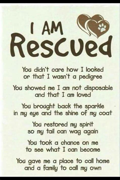 house training an adopted dog 25 best rescue dog quotes on pinterest vizsla rescue