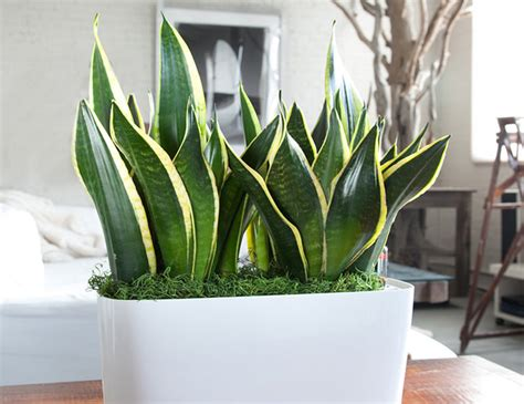 cool small plants to grow 10 best indoor plants for men gear patrol