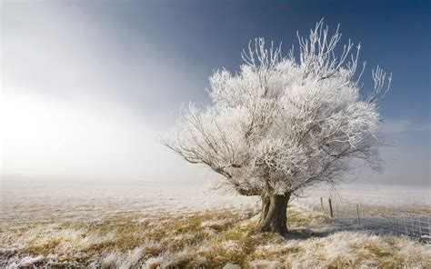 Frosty Tree - nature a frosty tree a frosty day in central otago new