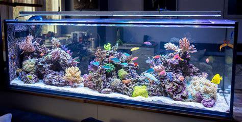 Pompa Aquarium Pompa Akuarium At 106 At 106 Atman tank profile marco pardun s 104 gallon room divider