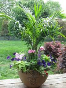 Best Plants For Outdoor Patio by Container Garden Palms Annuals Flowers Gardens