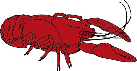 crawfish clipart crayfish clip at clker vector clip