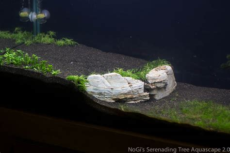 aquascape fish aquascaping rocks and roots buscar con google