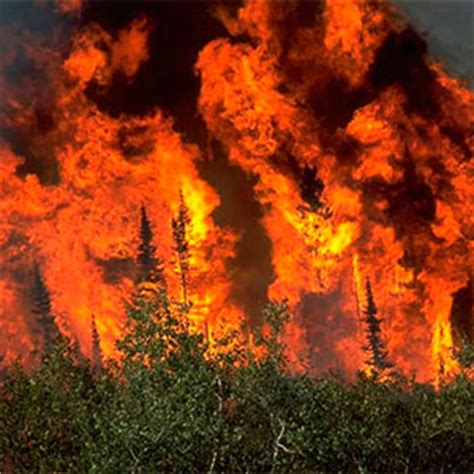 imagenes ecologicas impactantes consecuencias ecol 243 gicas de los incendios desertificaci 243 n