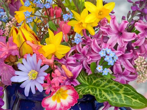photos of spring flowers spring flowers from the garden wallpapers hd wallpapers