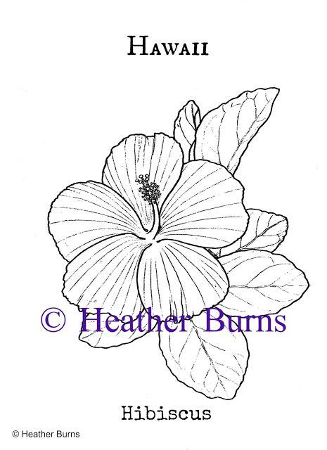 yellow hibiscus coloring page 251 best usa state symbols images on pinterest coloring