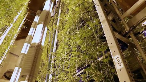 vertical growing  spatial gardening technique cannabis