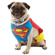 pug in superman costume 1000 images about pugs in costume on pugs in costume pug and a pug