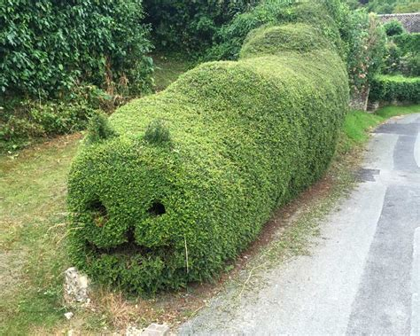 Garden Ideas by Gardensonline Lonicera Nitida