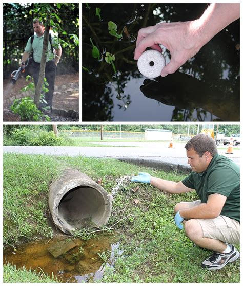 how to get rid of mosquitoes in your backyard how to get rid of kill mosquitoes mosquito treatment