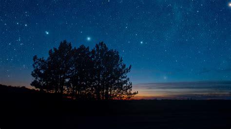 wallpaper  starry sky night trees
