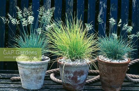 gap gardens ornamental grasses in terracotta pots image no 0131231 photo by juliette wade