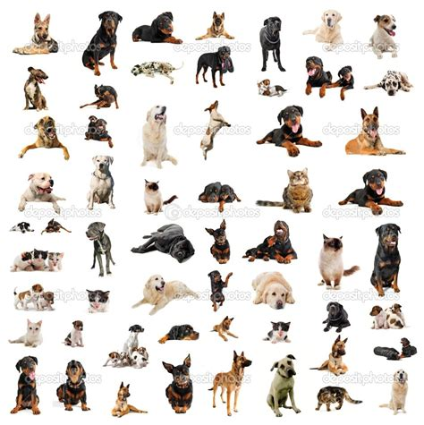 types of dogs chart photos types of breeds dogs chart small house breed litle pups