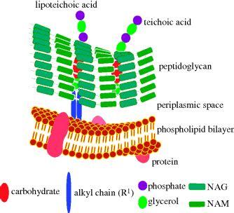 microorganisms basicmedical key
