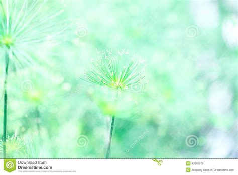 soft green soft green nature abstract background stock photo image