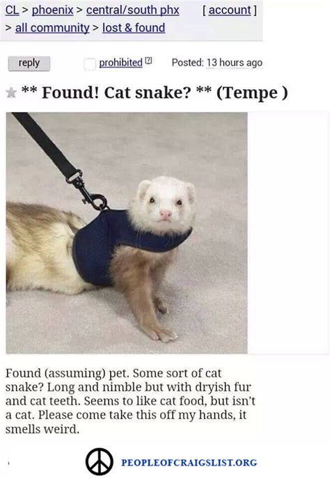 found craigslist found cat snake from of craigslist