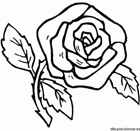 imagenes de flores para dibujar a lapiz grandes dibujo de una flor grande con hojas