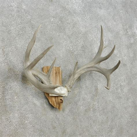 Deer Antler Ls For Sale by Whitetail Deer Antler Plaque Mount For Sale 13942 The