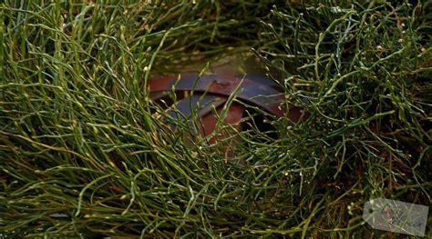 advent advent ein kranz diy living green