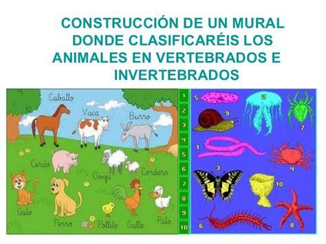 imagenes de animales inbertebrados vertebrados e invertebrados