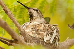 Backyard Tours How To Attract Nesting Hummingbirds