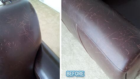 my cat scratched my leather couch cat scratch fever better after