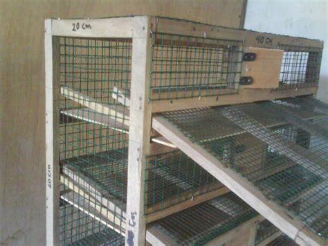 Harga Alas Kandang Ayam Petelur gambar kandang burung puyuh petelur yang ideal miniatur