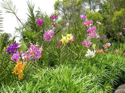 Botanic Garden Orchid Garden Singapore 05 04 Singapore Botanic Gardens National Orchid Garden