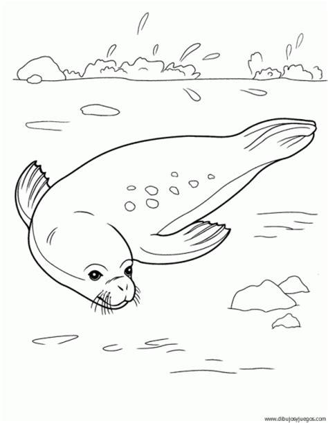 imagenes para colorear foca dibujo de foca 001 dibujos y juegos para pintar y colorear