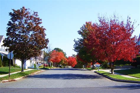 in color nj the tree lined streets of the timbers in barnegat nj