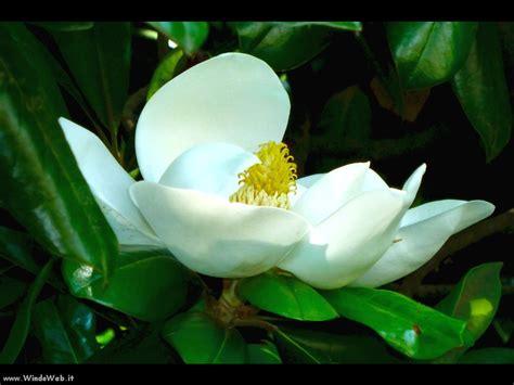 foto artistiche fiori fiori foto artistiche