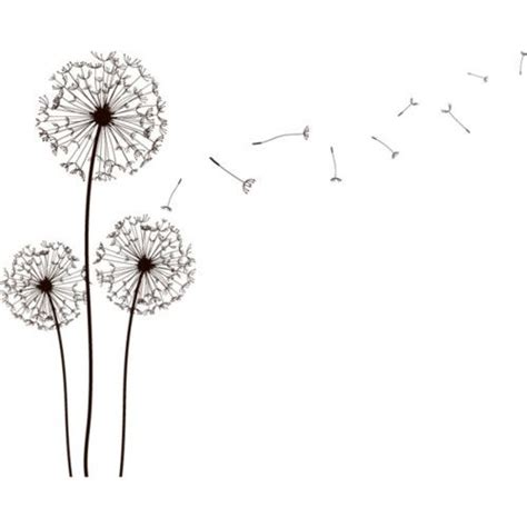 17 best ideas about dandelion drawing on pinterest dandelion art burning dandelion and