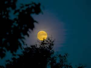 harvest moon harvest moon and supermoon is this weekend the cing
