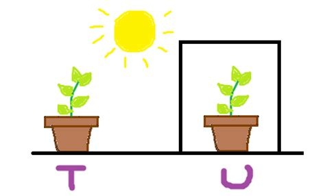 plants that need sunlight science basic needs of organism