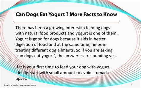 can puppies eat yogurt can dogs eat yogurt more facts to