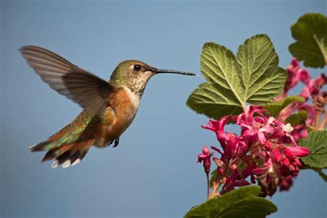 a chorus of color amazing birds on public lands u s