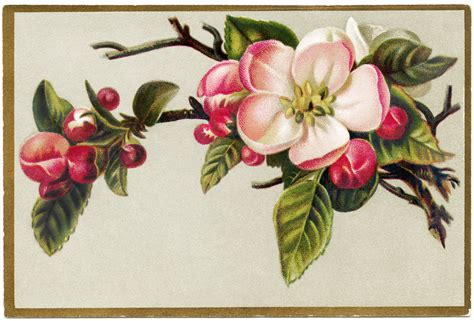 printable victorian flowers free vintage image apple blossoms card old design shop blog