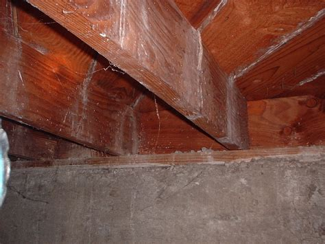 mold in the house mold mineral deposits or what hardwood floors smell cleaner installation