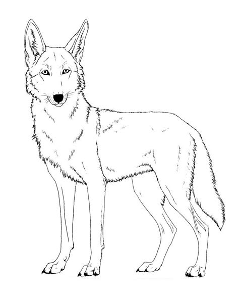 printable coyote coloring pages coloring me