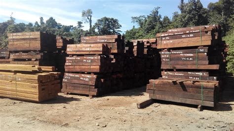 suplier kayu supplier kayu merbau papua supplier merbau pt sariwana