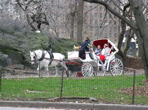 christmas day in central park picture of central park