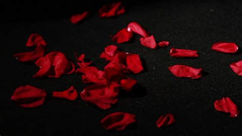 Dying To Or Falling petals falling motion shallow depth of field