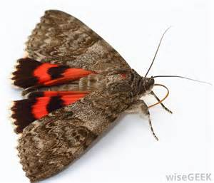 what are the best ways to kill moths with pictures