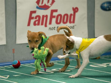 puppy bowl teams puppy bowl matchups bowl sunday si