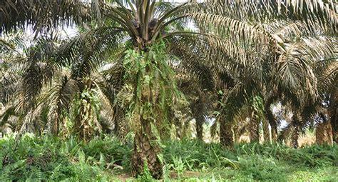 Hukum Tata Lingkungan Koesnadi berita sawit indonesia berkomitmen tegakan hukum dan tata kelola hutan
