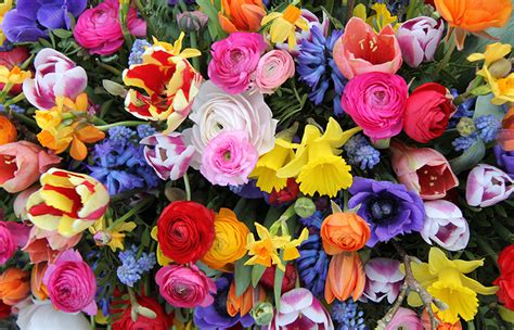 fiori per un compleanno fiori da regalare per un compleanno idee regalo dillo