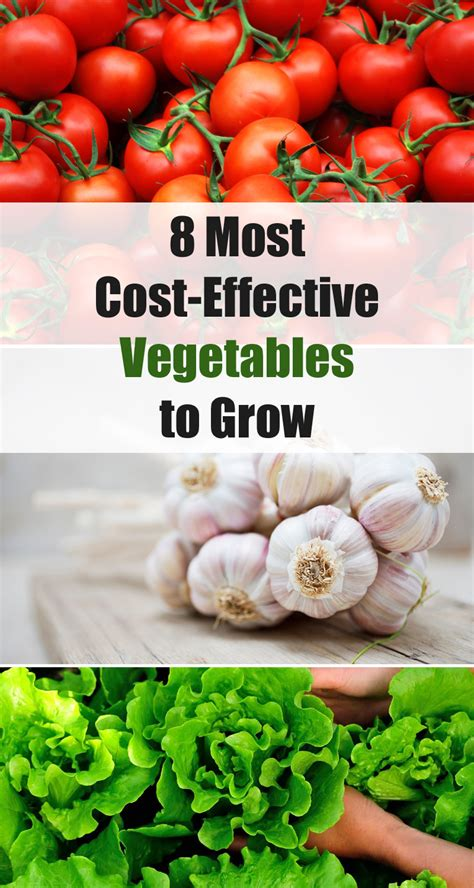 8 vegetables in 8 most cost effective vegetables to grow