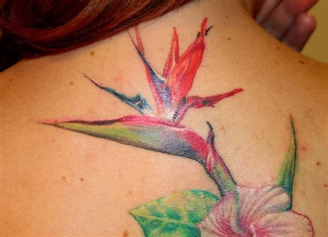 birds of paradise tattoo birds of paradise tattoos and such