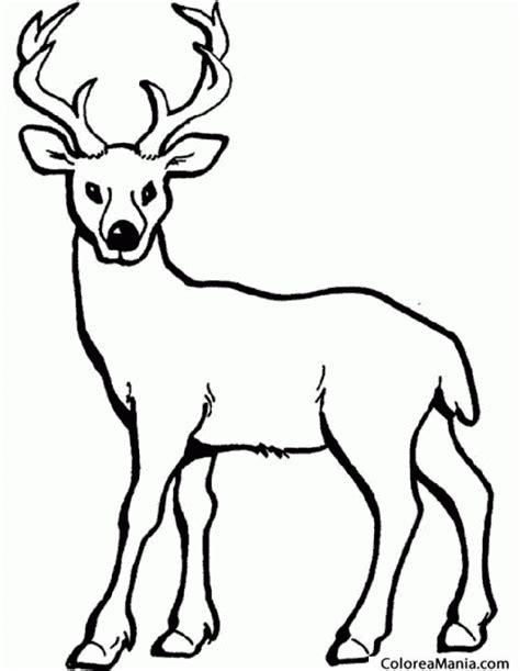 imagenes para colorear venado colorear alce ciervo deer crvol 2 animales del bosque